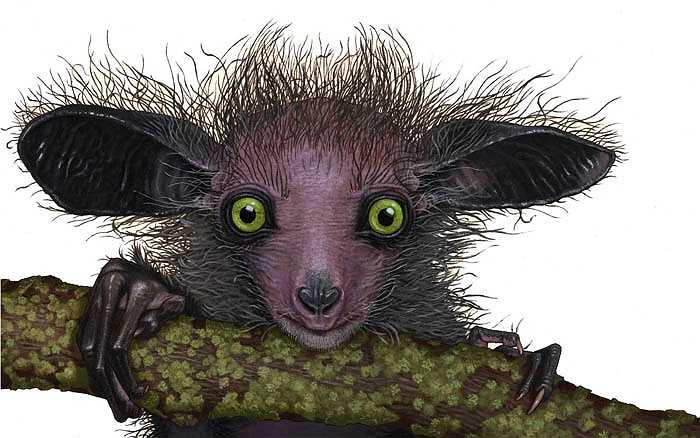 Đây là loài động vật ăn tạp. Chúng ăn các loại hoa quả, hạt cây, côn trùng, mật hoa, nấm... Đặc biệt chúng rất thích ăn bọ cánh cứng và các loại quả có vỏ cứng như dừa, hạt cứng như hạt cây gai...