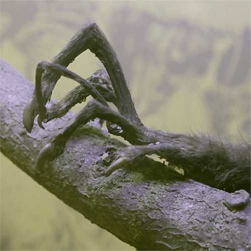 Chúng sống ở những khu rừng nhiệt đới và rừng cây rụng lá. Chúng cũng thường tìm đến các khu vực canh tác để kiếm thức ăn.