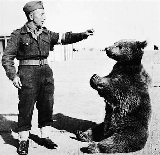 Một chú gấu ở Ba Lan đã được phong hàm Hạ sĩ và được dạy các kỹ năng làm việc cơ bản, thậm chí có thể chào hỏi, vật lộn và chơi đùa thoải mái với các chiến sĩ
