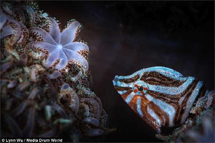 Những bức ảnh rực rỡ sắc màu về cuộc sống dưới đáy đại dương