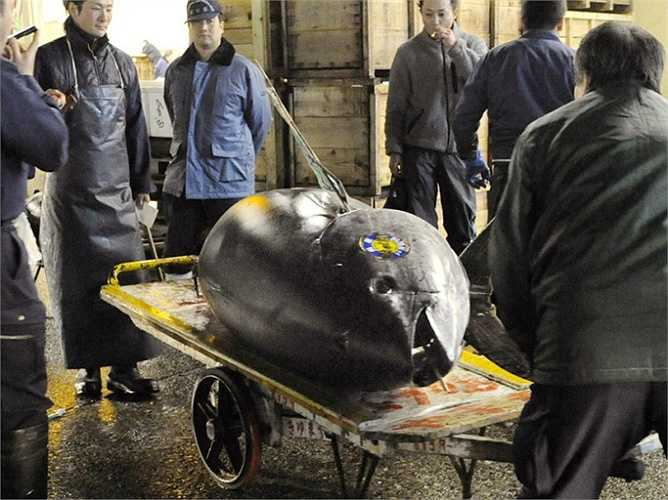 Con cá ngừ vây xanh khổng lồ này được bán với giá 32.490.000 ¥, tương đương gần 396.000 $ tại một phiên đấu giá tại chợ cá Tsukiji ở Tokyo