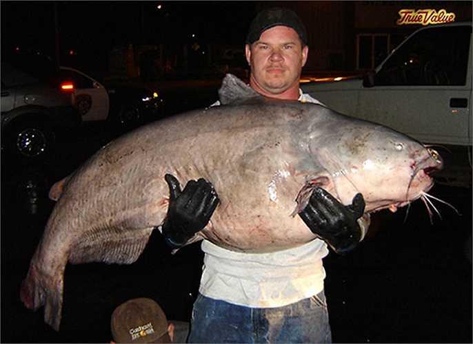 Tim Pruitt đến từ Alton, Illinois nắm giữ một con cá trê xanh nặng 56kg, dài 1.5m. Tim đã phải mất hơn nửa giờ trên sông Mississippi gần Alton để bắt con cá này
