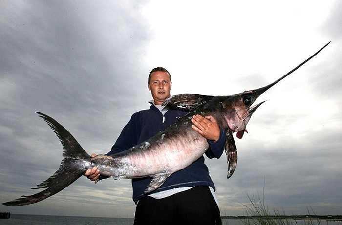 Một ngư dân tên Mark Watson đã bắt được một con cá kiếm nặng 26 kg, dài 1.8 m sau khi nó bị mắc vào lưới của ông