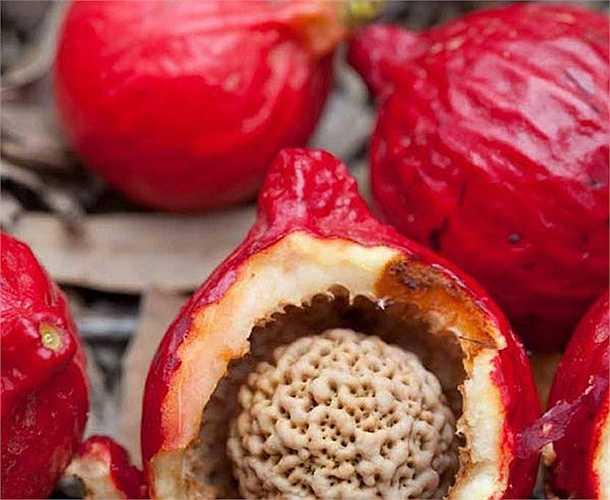 Hiện nay, loại quả đào đỏ này được đầu bếp nổi tiếng Ben Lethbrigde dùng làm món bánh úp ngược giống bánh táo úp ngược kiểu Pháp.