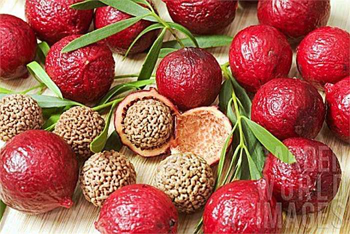 Hạt của quả Quandong khá giống với quả óc chó và có thể ăn sống hoặc rang muối.