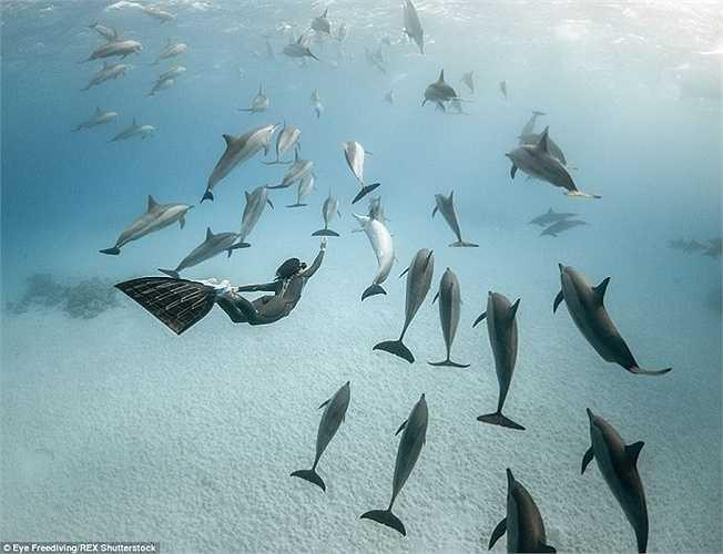 Hai thợ lặn tự do đã thực hiện một bộ ảnh với thiên nhiên hoang dã dưới đại dương. Đây là hình ảnh một đàn cá heo ở vùng Biển Đỏ