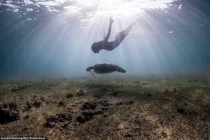 Alex Roubaud nói lặn tự do cho phép họ nhìn thế giới theo một cách khác so với các thợ lặn chuyên nghiệp