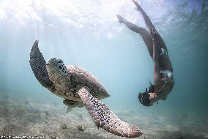 Với hai thợ lặn này, phương pháp lặn làm giảm sự căng thẳng của các sinh vật biển là cách tốt nhất để tương tác với chúng