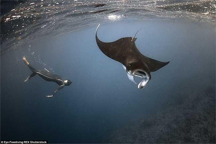 Rouband nói 'lặn tự do rất thân thiện với môi trường và cách tốt nhất để gần gũi với cuộc sống dưới đại dương'