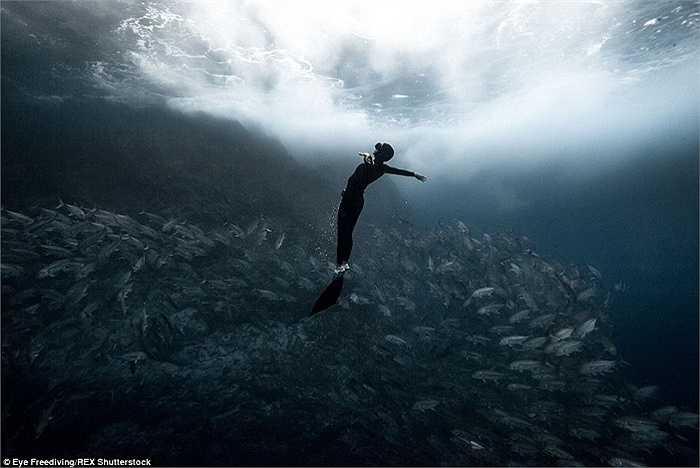 Hai thợ lặn cho rằng lặn tự do không phải là một hoạt động nguy hiểm nếu chúng ta biết tuân thủ những nguyên tắc an toàn cơ bản