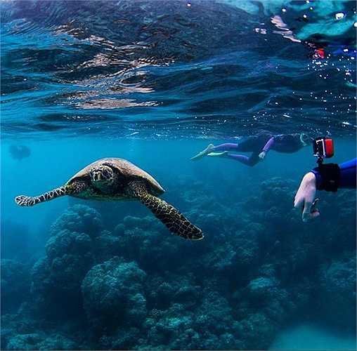 Đến với Ningaloo Reef, hãy lặn với những chú rùa biển và ngắm nhìn di sản thế giới nổi tiếng nhất nước Úc.