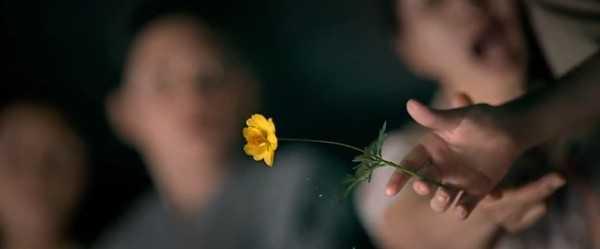 tôi thấy hoa vàng trên cỏ xanh