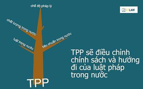 Hầu hết các thỏa thuận quốc tế là về xuất nhập khẩu hàng hóa, dịch vụ, nhưng TPP thì khác. Chính bản thân TPP sẽ tạo ra các điều luật quốc tế có khả năng điểu chỉnh chính sách và hướng đi của luật pháp trong từng quốc gia thành viên. Nói một cách khác, các điều luật của các quốc gia thành viên sẽ phải tuân theo định hướng của TPP.