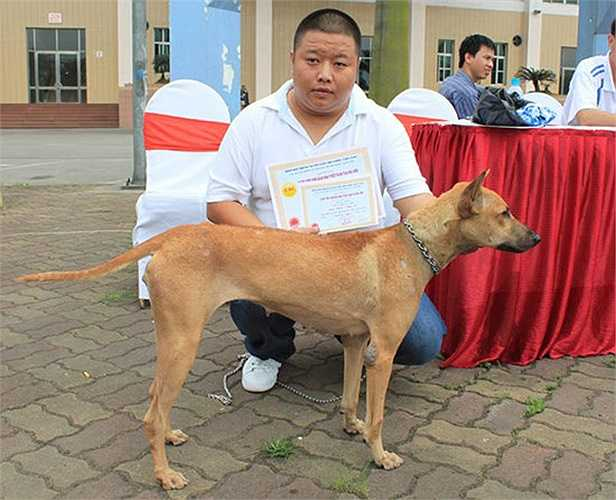 Chó Phú Quốc là giống chó tinh khôn, săn mồi giỏi và bơi lội rất nhanh do chân có màng giống như chân vịt. Với những đặc tính trên, giống chó Phú Quốc được các nhà khoa học và những người yêu thích chó quan tâm.