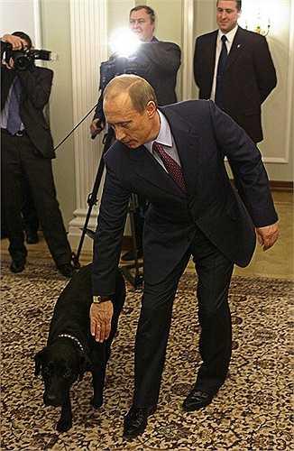 Chó săn giống Labrador Retriever tên gọi là Koni (Connie) là món quà của Bộ trưởng bộ Tình trạng Khẩn cấp Sergei Shoygu khi đó tặng  ông Putin nhân dịp sinh nhật