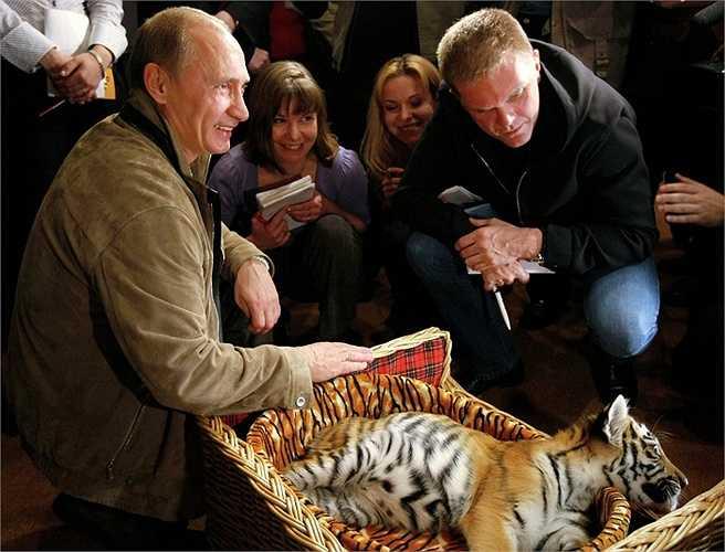 Món quà đặc biệt khác mà ông Putin nhận được nhân dịp sinh nhật là con hổ con Siberia 2 tháng tuổi