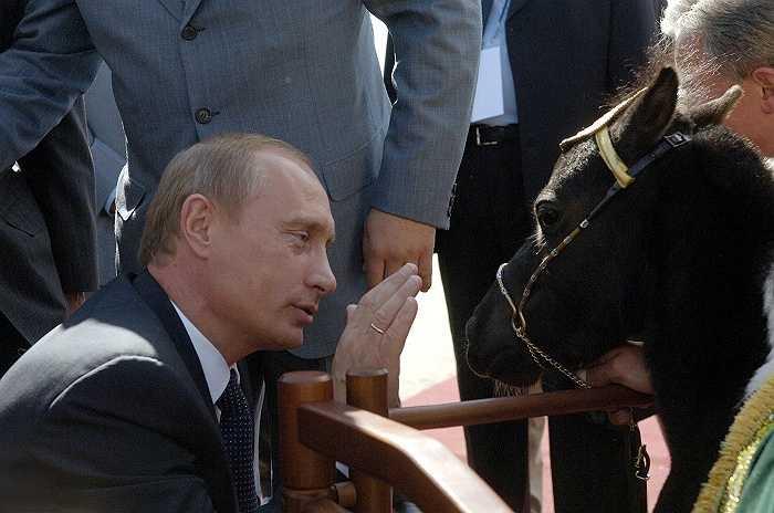 Khi tới thăm thành phố Kazan, Cộng hòa Tatarstan, ông chủ điện Kremlin đã được tặng một chú ngựa nhỏ tên Chip, cao 57cm