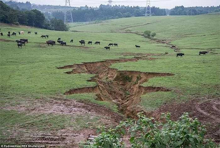 Người dân vẫn chăn thả gia súc ăn cỏ ở gần nơi cấm địa dù đã được cảnh báo về lượng phóng xạ ở khu vực này.
