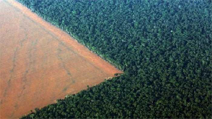 Ảnh chụp từ trên cao rừng Amazon thuộc khu vực bang Mato Grosso, miền tây Brazil với một phần rừng bị phá để chuẩn bị cho việc trồng đậu tương