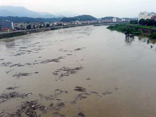 Củi rác trôi lềnh bềnh trên sông Hồng - Ảnh: Hồng Thảo