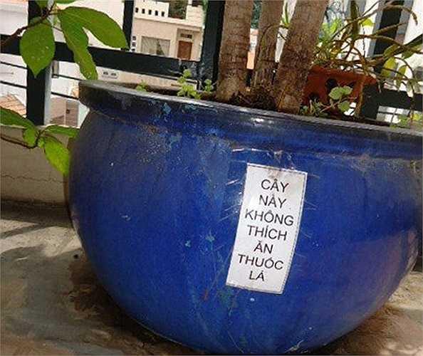 Hẳn là gốc cây này đã từng bị vứt rất nhiều thuốc lá nên chủ nhân mới phải dán tờ giấy nhắc nhở.