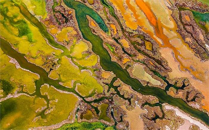 Bức ảnh tảo nở hoa được chụp từ không trung đã mang về giải thưởng Nhiếp ảnh gia bầu trời cho Edwin Giesbers