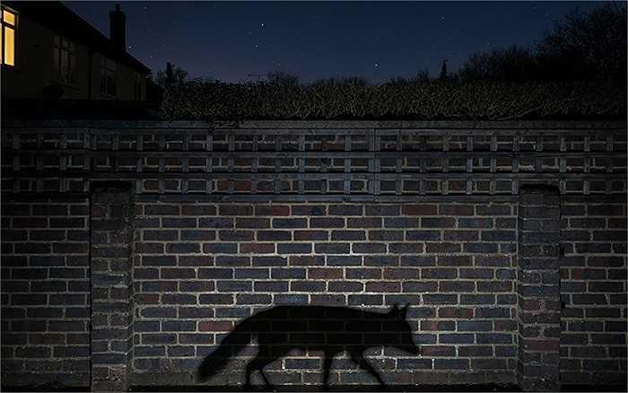 Cảm giác về cuộc sống trong bóng tối đã được Richard Peters truyền tải trong bức ảnh mà anh đã chụp được trong khu vườn nhà mình. Bức ảnh này đã giúp Richard có được giải thưởng Nhiếp ảnh gia về thành thị