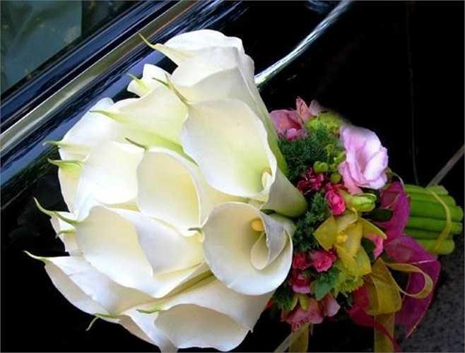 Hoa Zum,hay còn là Rum,tên thật là hoa Thủy Vu. Thủy vu thể hiện sự cung kính, tôn nghiêm. Hoa dành tặng cho Mẹ, chị gái hoặc người phụ nữ bạn tôn kính, yêu quý.