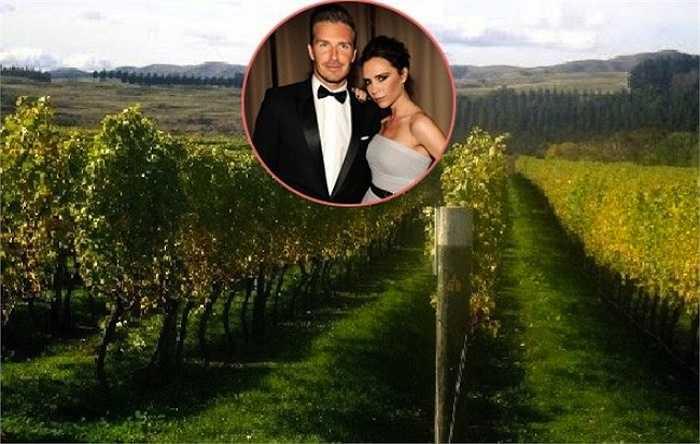 David Beckham đã bỏ ra gần 10 triệu USD để sắm một vườn nho ở thung lũng Napa dành tặng vợ nhân dịp sinh nhật. Victoria rất bất ngờ khi được uống loại rượu mang nhãn hiệu Victoria Beckham trong tiệc sinh nhật của mình. Đó là rượu được sản xuất từ nho trồng ở khu vườn Becks tặng.