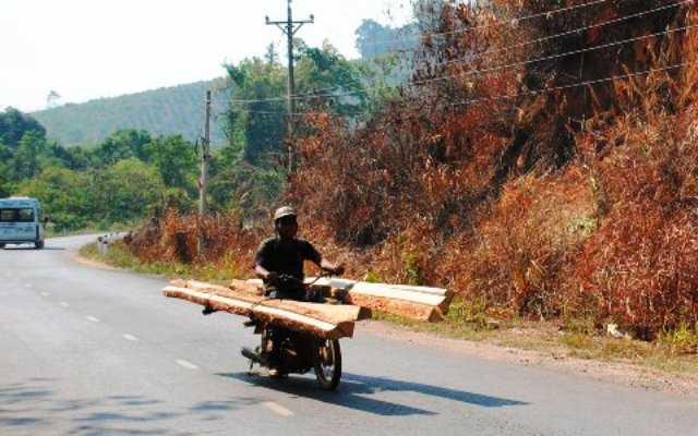 một người bị gỗ đè chết khi chở gỗ bằng xe máy (Ảnh minh họa,nguồn: internet)