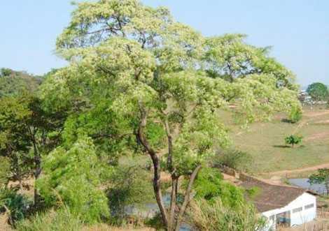 Ngôi làng Vilcabamba và cây Willka