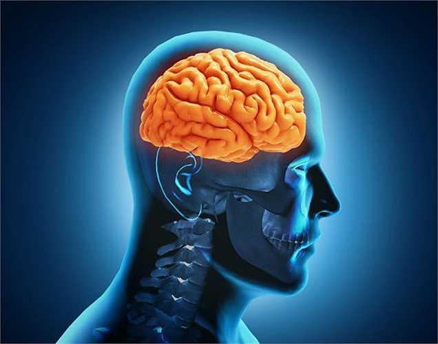 Tốt cho sức khỏe não: Rượu vang đỏ cũng ngăn ngừa bệnh alzheimer bằng cách ngăn ngừa các tổn thương của các tế bào não.