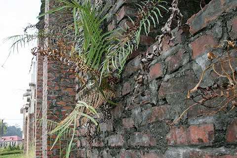 Bỏ hoang lâu ngày nên tường nhà rêu phong ẩm mốc, cỏ dại mọc trên tường.