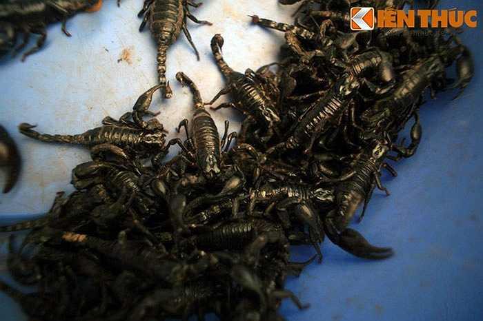 Thường được gọi là 'chợ côn trùng', khu chợ siêu quái dị này có mặt hàng đặc trưng nhất là rất nhiều chủng loại côn trùng, sâu bọ khác nhau như bọ cạp, nhện, bửa củi, mối chúa... Chúng được sử dụng để ngâm rượu thuốc và đôi khi là làm món ăn.