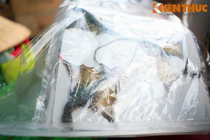 Nhiều loài bò sát xuất hiện tại chợ Tịnh Biên như thằn lằn bay, tắc kè, các loại rắn khác nhau...