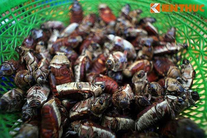 Chợ Tịnh Biên cũng là một đầu mối bán bọ rầy, vốn là một loài côn trùng có hại nhưng những năm gần đây đã trở thành đặc sản ở An Giang.