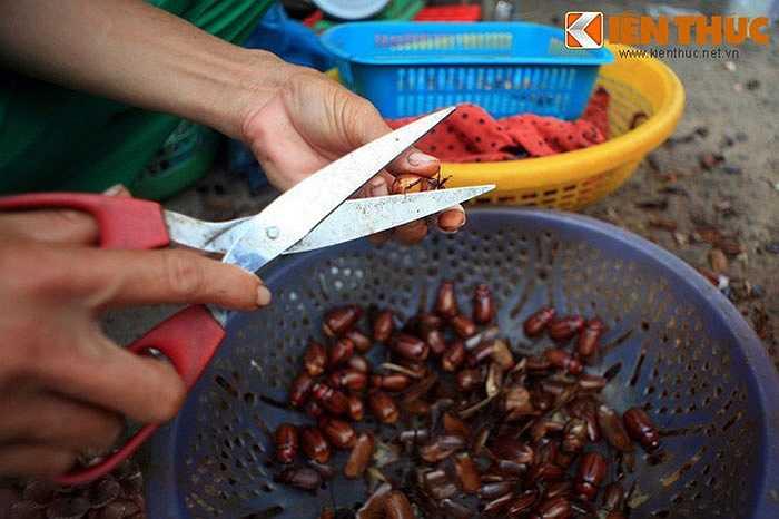 Cắt bỏ cánh và chân bọ rầy ngay tại chợ.
