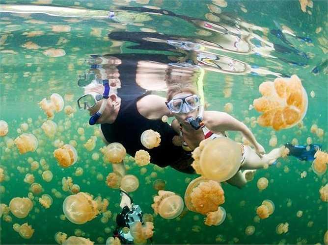 Palau: Quốc gia ở Thái Bình Dương với nhiều địa điểm đẹp trong đó có dịch vụ lặn biển
