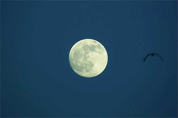 3. Rất có thể Mặt trăng đã từng là nơi cư trú. Một số hình ảnh trên bề mặt Mặt trăng mà các nhà nghiên cứu không thể giải thích khiến một số người tin rằng Mặt trăng đã từng là nơi cư trú của một tộc người ngoài hành tinh trước khi con người Trái đất đặt chân tới nơi.