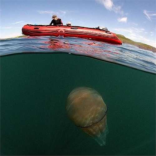 Nguyên nhân của việc sứa dạt vào bờ có thể do thời tiết nóng bức khiến các loài sinh vật phù du 'xâm chiếm' các bãi biển