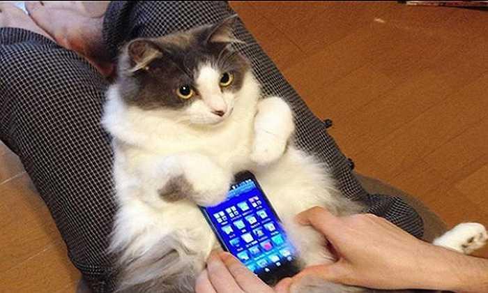 Ngay lập tức, những thú cưng được nuôi trong nhà như mèo, thỏ... được chủ nhân biến thành loại vỏ điện thoại có 1-0-2 trên thế giới.