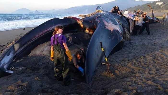 Sự nóng lên của đại dương đã ảnh hưởng đến các loài nhuyễn thể. Trong khi đó, nhuyễn thể là thức ăn của cá voi. Điều này gián tiếp ảnh hưởng đến thức ăn của cá voi xanh