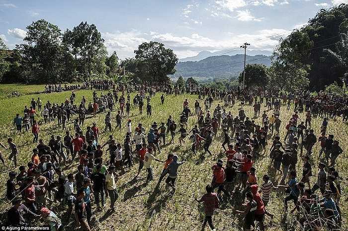 Hàng trăm người tham gia một nghi lễ gọi là Sesemba ở một ngôi làng trên đảo Sulawesi, Indonesia