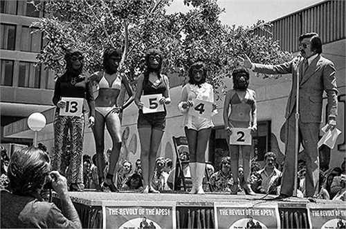 Hoa hậu Khỉ là một cuộc thi vô cùng kỳ dị. Các thí sinh sẽ đọ sắc khi đội mặt nạ khỉ. Dominique Green, một người từng nhận danh hiệu Nàng khỉ xinh đẹp nhất còn nhận được vai diễn trong bộ phim  'Cuộc nỏi dậy của bầy khỉ' (phiên bản cũ)
