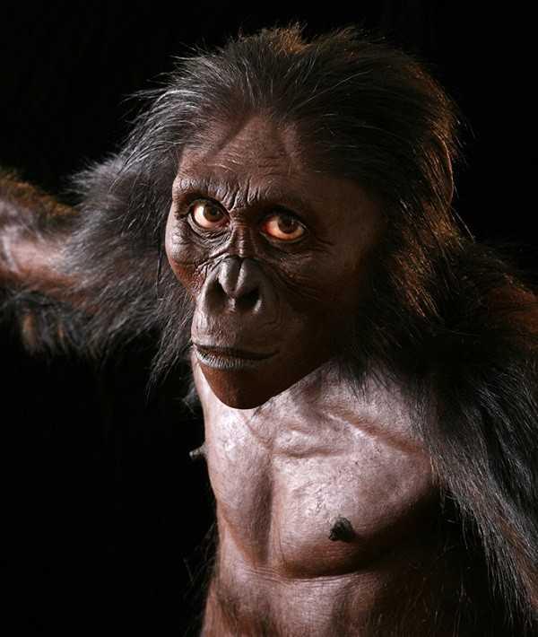 Hình ảnh mô phỏng người vượn phương Nam Lucy