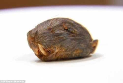 Đầu chuột chết được phát hiện trong thức ăn của ông Wilson