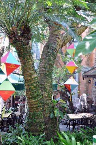 Cây thiên tuế 600 tuổi trong khu nhà cổ của ông Lê Bá Huy