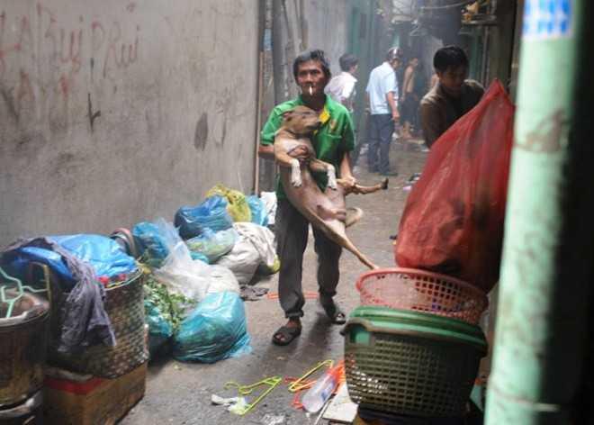 Nhiều người dân vẫn cố nán lại di tản đồ đạc và vật nuôi.