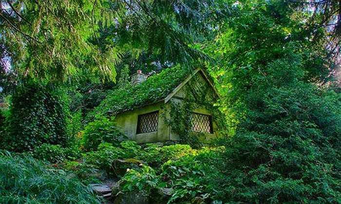 Một số nhà cây cối quá um tùm: Cây xanh về bản chất có tác dụng tốt trong phong thủy. Nhưng nếu trồng quá nhiều cây và đặc biệt nhiều cây to lớn sẽ che phủ hết ánh sáng tự nhiên của ngôi nhà, gây ảnh hưởng xấu đến sức khỏe và đến vận may của gia chủ.