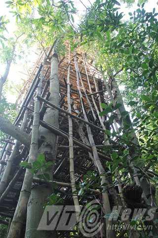 Lâu đài được dựng dựa trên 4 cây gòn được cụ Dương trồng cách đây hơn 40 năm